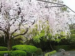 法事のあとに桜を見に京都へ(1)