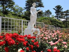 生田緑地ばら苑&武蔵小杉界隈散策