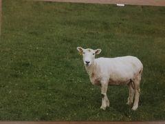 【黎明録2】2001年バッカスらびたん★ワイン友達を訪ねてNZオークランド