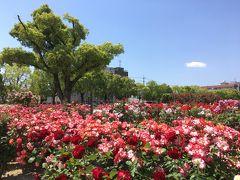 広島☆バラ公園と海の見えるカフェ