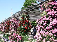 薔薇の季節の横浜