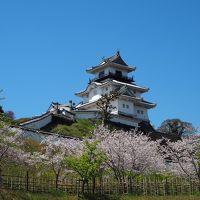 青春18きっぷの旅 2019年春 平成最後の桜を求めて [8] 静岡、掛川城の桜など