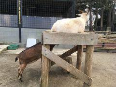 男一人で夢見ヶ崎動物公園に行ってきた