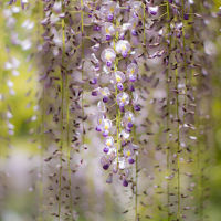 花がいっぱいのリステル猪苗代ハーブ園