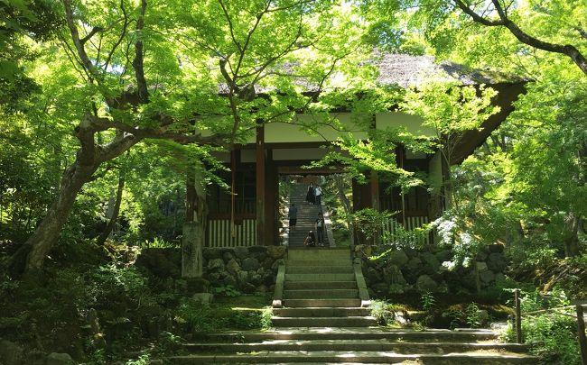 昨日は八瀬・大原へ行きました。<br />今日は嵐山へ。<br />レンタサイクルを借り、<br />・宝厳院(天龍寺)<br />・野宮神社<br />・常寂光寺<br />・祇王寺<br />・宝筺院<br />・鹿王院<br />を回りました。<br />初夏の風を感じながら、緑美しい寺院巡りができました。