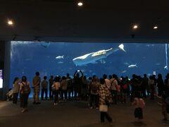 GWのいおワールドかごしま水族館へ