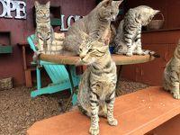 Lanai cat sanctuary 訪問記