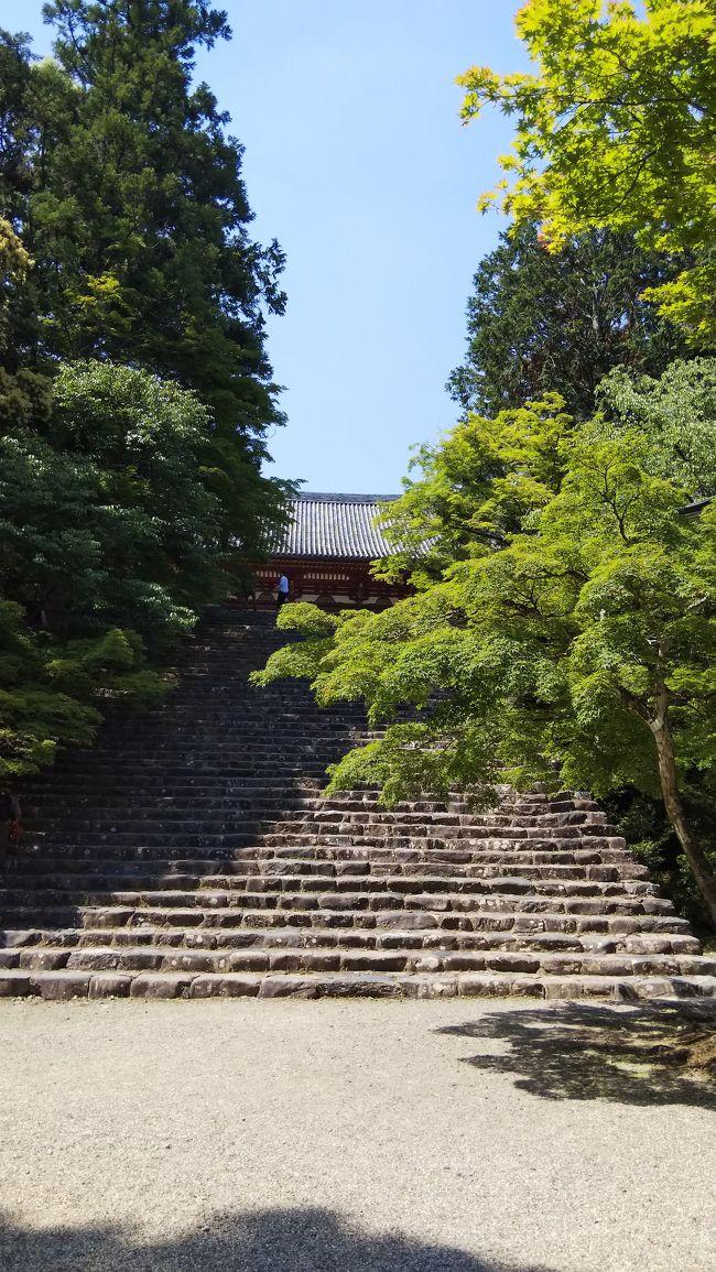 毎年恒例のお墓参りのため、京都に行ってきました。<br />その後は高雄に足をのばして神護寺&amp;高山寺をお参り、鮮やかな青紅葉に癒されてきました。<br />その記録です。