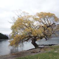 秋のクイーンズタウンとワナカ4日目:ファーグバーガー、ワカティプ湖、スーパーシャトルで空港へ