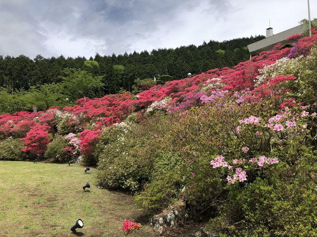 大涌谷方向に向かう途中に花月園はあります ツツジ祭りが行われていました<br />