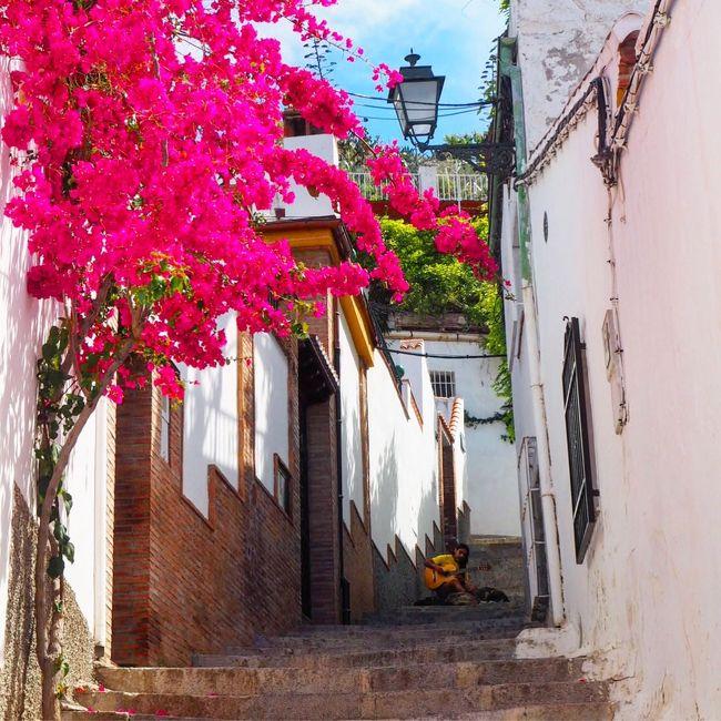 スペインの食べ物が1番美味しい&#8252;️ヨーロッパを歩き慣れた旅行客のほとんどが言う言葉…それならばと、前々から行きたかったグラナダを中心にアンダルシア地方を歩いてきました。<br />5泊7日のうちセビリア1泊、ゴルドバ1泊、グラナダ2泊、マドリード1泊とちょっと忙しい旅でしたが、スペインらしさ満載の街の雰囲気は思いっきり楽しめたと思います。<br />5月は色鮮やかな花も沢山咲いていて癒されもした旅でした。
