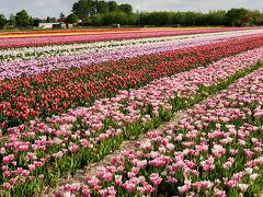 花と美食と名画のベネルクス周遊旅行(6・7・8日目)★キューケンホフ公園・アムステルダム・帰国