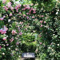 ★横浜ローズウィーク★ バラ咲き誇る〈港の見える丘公園〉と、横浜元町で美味しいもの巡り