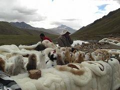 ペルー② インカエクスプレス社のバスで行くインカ道の旅(プーノからクスコへ)