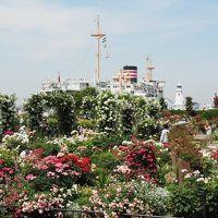 横浜ローズウィーク@山下公園〜港の見える丘公園
