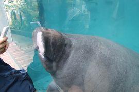 令和最初のレッサーパンダ動物園GWの伊豆めぐり(6)熱川バナナワニ園(後)スローライフ・マナティじゅんと君や今回は最後まで回った本園・植物園