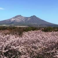 468-つまみ食い東北旅行記�…早朝フェリー乗船のため青森宿泊、北海道に帰ったらそこは春だった!