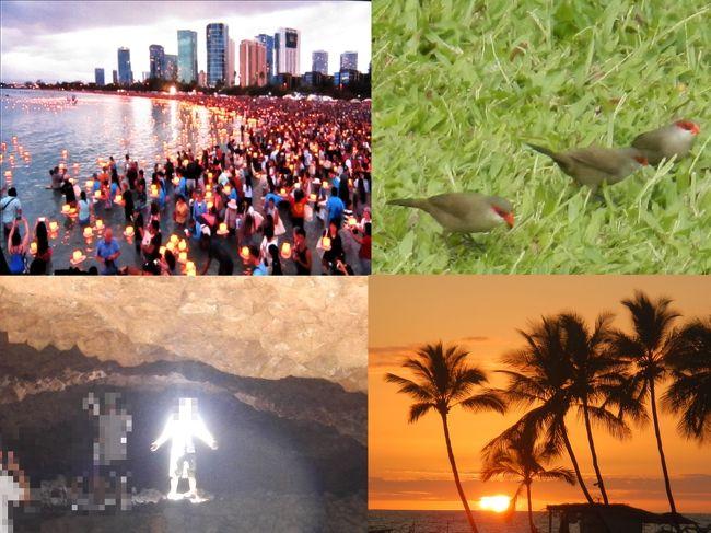 2019年のハワイ旅行日記<br /><br />毎年のようにハワイを訪れて暮らすように滞在していますが、今回の初体験としいては<br />ハワイ灯籠流し(会場の大型画面より)<br /> ハワイで最も小さい鳥の一種オナガカエデチョウ (Common Waxbill)を見かける<br />溶岩洞窟のオーラー写真<br />などでした。<br /><br />今回のハワイ島はいつもに比べて曇りの日が多く、ワイコロアのAベイの夕日もあまり見られませんでした。<br /><br />