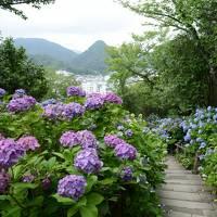 あじさい日本一の城跡下田公園