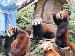 初夏のレッサーパンダ詣の市川市動物園~ミルクちゃんとココアちゃんの成長ぶりと母子4頭同居が見たくて&お散歩リクガメやコツメカワウソ握手会も