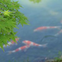 平成から令和へ。2019年GWの四国の旅【9】松と青もみじが美しい栗林公園から小豆島へ