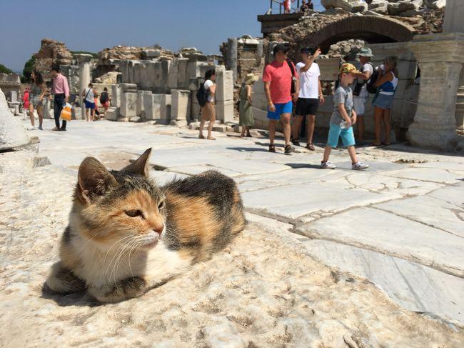 2人の娘を持つ会社員<br />2018年の夏 娘(当時高校2年生)の夏休みを利用して2人でトルコ旅行に行ってきたときの旅行記です。<br /><br />No3 エフェソス・サモス編<br /><br />2018年7月9日~16日<br />【観光ルート】<br />  9日 関空→イスタンブール<br /> 10日 イスタンブール<br /> 11日 イスタンブール→(夜行バス)→クシャダス<br /> 12日 クシャダス、エフェス観光<br /> 13日 ギリシャ・サモス島観光<br />                   (クシャダスから船でギリシャの島に渡れます)<br /> 14日 クシャダス→パムッカレ→(夜行バス)→カッパドキア<br /> 15日 カッパドキア観光<br /> 16日 カッパドキア→(飛行機)→イスタンブール→関空<br /> 17日 関空着