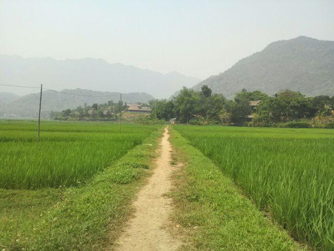 少数民族が暮らし、美しい田園風景が広がる田舎町マイチヤウ。<br />そして日本の原風景にも出会える…んですが、<br />その実態は…ハノイからのお手軽観光地だった…。<br />いや~結構すごいことになっちゃってます。<br />行き方は<br />https://4travel.jp/overseas/area/asia/vietnam/hanoi/transport/10579940/tips/13584175/<br />が参考になればなと思います。