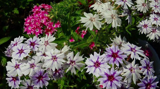 その5からの続きです。<br /><br />写真は、珍しい形のお花です。