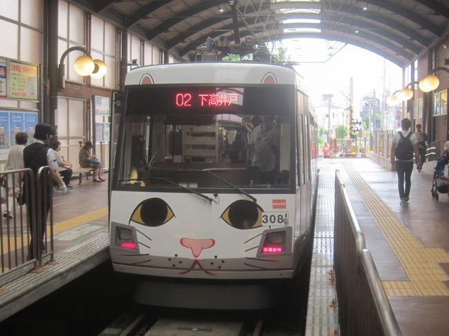 2017年9月の玉電開通110周年記念イベント時に東急世田谷線に登場した「幸福の招き猫電車」が、世田谷線50周年記念企画の一環として復活しました。今回は新たに車体前面に猫耳が描かれるなど、より猫感を強く打ち出したデザインになっています<br />そんな世田谷線の沿線を25,836歩のお散歩。インスタスポットにもなっているようですが、豪徳寺の招き猫を見て、幸福の招き猫電車にも乗ってきました!<br /><br />【表紙の写真】東急世田谷線「幸福の招き猫電車」