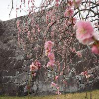 桜満開前線ちょいズレの道南城巡り ①北海道上陸前に盛岡に寄り道し城散策。夜はトラベラーFさんと会食