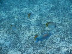 梅雨の沖縄は・・やっぱり曇りの三泊四日でした(>_<) 到着~水納島とダイヤモンドビーチ