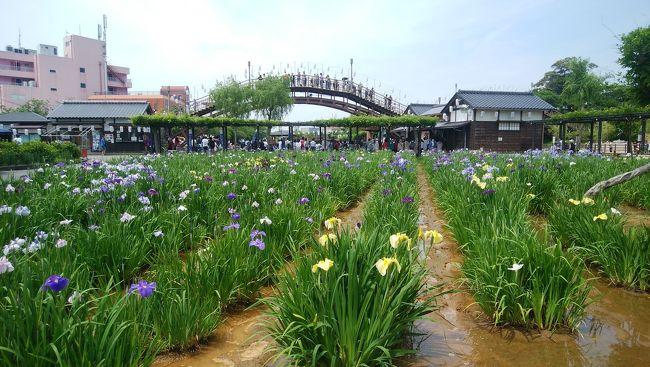 今シーズンは旅行日当日から運行開始の特急あやめ祭りに乗って水郷潮来あやめまつり、佐原、成田山新勝寺と巡ってきました。