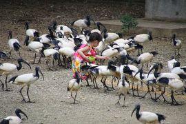 動物と触れ合いたくてネオパークオキナワ散策
