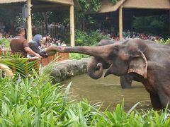 GW子連れシンガポール&ビンタン島3泊5日� アンダーズで朝食を♪☆動物園&リバークルーズ満喫☆編