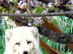 旭山動物園を独断と偏見で周る【番外編】 =豊かな表情を見せる旭山の動物たち=