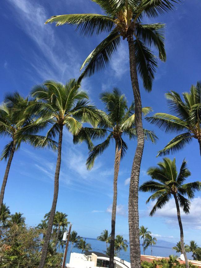 マウイ島に30年ぶりに行ってきました。<br /><br />いつもはANA派なのだが、今回はJALとコードシェアのハワイアン航空を初めて利用しました。<br />宿は全て友人持ちなので航空運賃だけで安くすむはずが。。。<br /><br />羽田→ホノルル→カフルイ(ハワイアン航空)<br />カフルイ→ホノルル(ハワイアン航空)→羽田(コードシェアのJAL)<br /><br />のんびりPCで座席サイトを眺めている間に席が無くなり、結局HISで航空運賃だけで20万弱も払うことに。<br />あー、こんなことだったらほんの1時間前に19万でハワイアン航空のビジネスクラス席が取れたのに。逃した!<br /><br />皆さんも、経験あると思いますが、これは!と安いのを見つけたら即決すべきですね。<br />しかたがない。また何時か何処かでこの出費分は挽回します。<br /><br />旅行プラン<br /><br />1 ホウェールウオッチング<br /><br />2 モロキニクレーターで亀とたわむれる<br /><br />3 コーストラインを乗馬<br /><br />4 ワイナリー訪問<br /><br />5 ハレアカラ国立公園からの夕日<br /><br />6 ラハイナを散策<br /><br /><br />