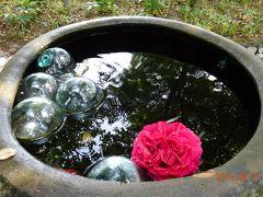 薔薇の季節に・・・別府温泉女子・・車でひとり旅・・・① 1日目  ~豊後名物 関アジとり天~