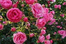 薔薇の季節に・・・別府温泉女子・・車でひとり旅・・・② 2日目 大神ファーム