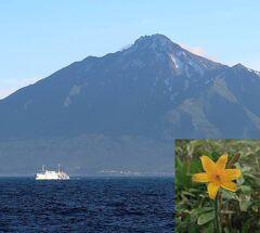 団塊夫婦の北海道花巡りドライブ&トレッキングー(1)利尻島を1日で周る