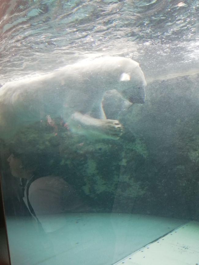 6月上旬の心地良い気候の時期に仕事が入った<br /><br />午前中が仕事で、午後は空いてるプラン<br /><br />旅行的には以下の4つがハイライトとなる<br /><br />・旭山動物園<br />・大黒屋<br />・幌加内でのそば<br />・旭川市博物館<br /><br />・旭山動物園<br />行く価値あり。しかも、平日に行くことができるなら、尚更よい。イメージ的には、13時に旭川駅を出れるように仕事が終わるのが理想的。片道40分のバスなので、往復で1時間半。17時前後に閉園なので、移動時間を差し引いて、園内では2時間半ある。一人でゆっくり見ても、平日の混み具合であれば、十分であった。<br /><br />・大黒屋<br />旭川にしかないジンギスカンの名店。ここは仕事関係者と訪問。たしかに上手い、予約は取らないし、待つのは必至。可能であれば、複数が良い気も。しかし、一人でも可能であるし、逆に早く入れるかもしれない。<br /><br />・幌加内でのそば<br />仕事が幌加内であったのだ、近くの蕎麦屋さんに。たしかに美味かった。しかし、距離があるので、ストレートフォワードな観光にはなりえない。お店は写真参照。<br /><br />・旭川市博物館<br />最終日の午後よりフライトまでに訪問。別の口コミで書いたが、好き嫌いがある。博物館が好きなので、楽しめたが。最終日の数時間は、人によっては、ラーメン巡りとかでも良いのかもしれない。あまり市内に、観光がないイメージである。