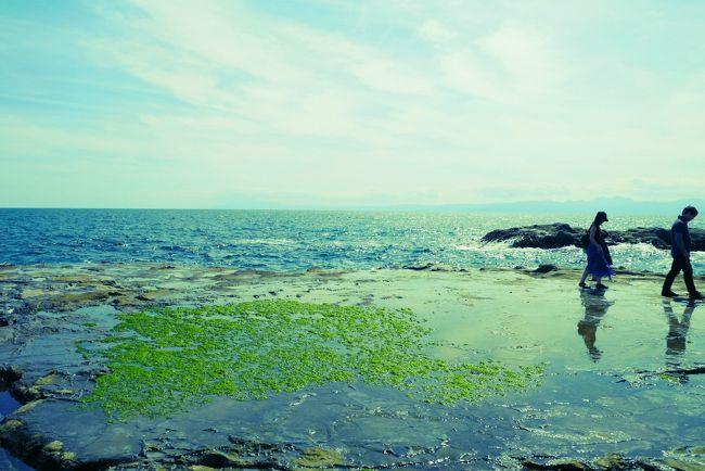 <br />生しらす解禁しているし、しらす丼を食べたい!!<br /><br />というわけで我が家の愛犬と共にいざ江の島へ行ってきました。