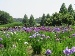 大宮第二公園「菖蒲田」と「アジサイ園」2019/6/6