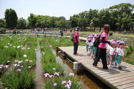 東京葛飾散策・・都立水元公園の花菖蒲園をめぐります。