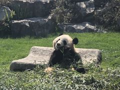 2019春の和歌山、桜とパンダと博物館2days