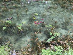 ★★フォトジェニック♪モネの池と長良川鉄道で岐阜県満喫旅★★