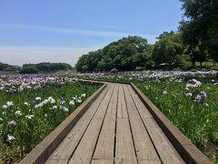 岡山と広島☆菖蒲と薔薇を楽しみました