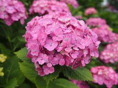 水元公園花しょうぶと葛飾柴又