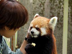 平川動物公園 久しぶり!!メロディちゃん!! 2日後から公開開始のメロちゃんに先行して会うことができました