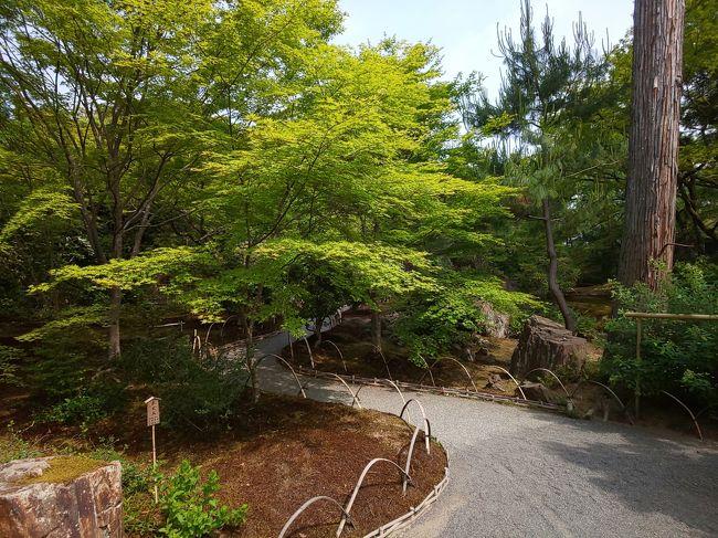 京都青もみじの旅、二日目です。<br />二日目は嵐山から嵯峨野まで歩きます。<br />(基本的にはバスですが・・・)<br />お目当ては春の特別公開の宝厳院さんです。