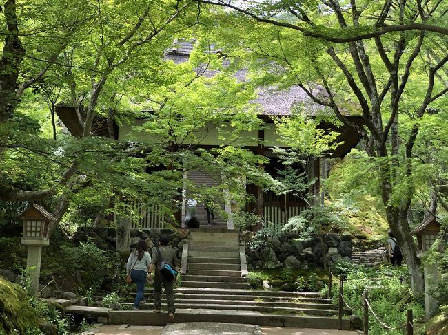 仕事のついでにふらっと奈良と京都を訪ねました。奈良では、ホテルから近かった興福寺と東大寺を、京都では、今までゆっくり訪ねたことがなかった嵐山を観光しました。<br />初夏の心地よい風が爽やかで、緑鮮やかな古都を楽しむことができました!